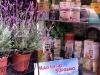 erboristeria-la-mimosa-vetrina